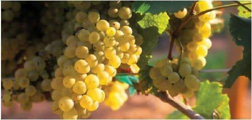 duplin-winery-1