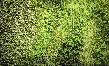 Biowalls The Vertical Garden