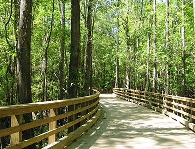 Wooded walking trail at Carolina Colours in New Bern, North Carolina