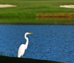 South Carolina Gated Communities | Dataw Island Golf Course | Goose
