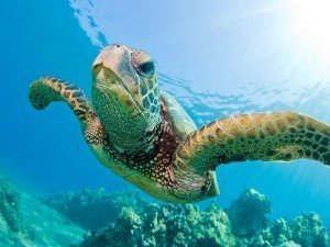 July_SeaTurtle