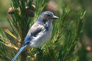 Blue Bird in Paradise   Weeki Wachee   Best Retirement Towns