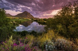 Sonoran Desert in Spring