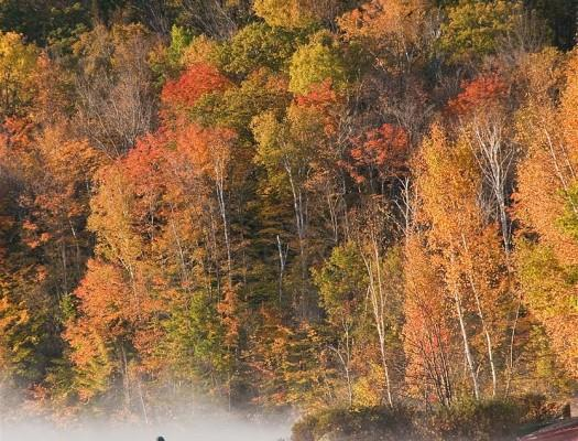 Eastman Community Association peak foliage