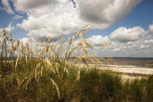Beach Oats, Tybee Island