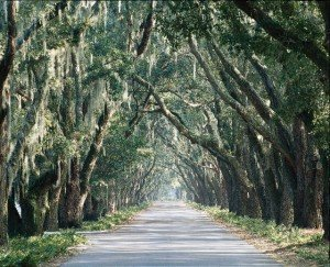 Avenue of Oaks copy (640x519)