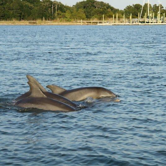 Islands To Visit In Charleston Sc