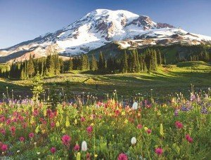 USA, Washington, Mt. Rainier National Park, wildflowers