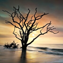 6 Reasons Nature Lovers are Nuts About Charleston, SC! - Sunrise at Botany Bay