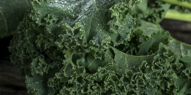 Kale – Not Just Fancy Lettuce