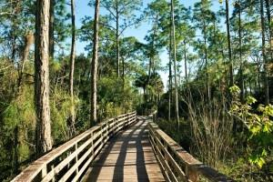 Best Places to Retire in Florida - Naples - Ave Maria - Corkscrew Swamp Sanctuary - Florida