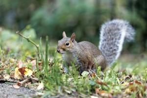 Squirrel - July Garden Article