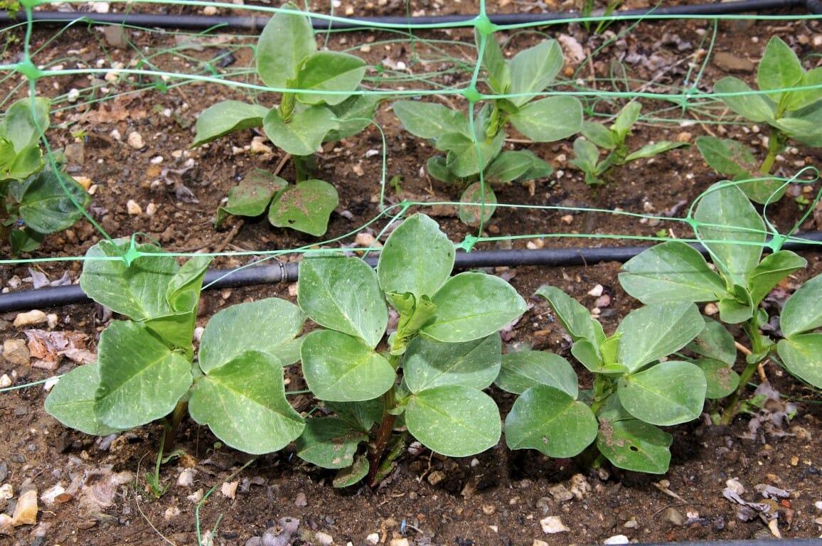 garden cover crops - Garden Cover