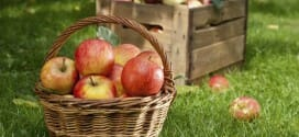 An Apple a Day … Apple Picking Season
