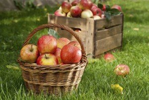 Appple Picking - Autumn Activities - Best Places to Retire
