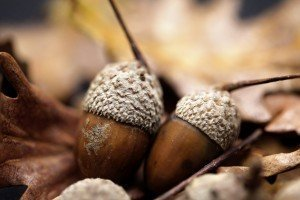 Gardening Tips - Acorns - Best Places to Retire - Autumn