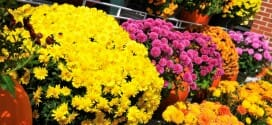 Fall Shopping and Other September Gardening Tips