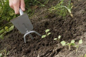 Fall gardening - preparing for Spring - tilling soil
