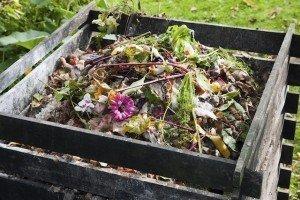 Compost - Compost bin - Fall gardening