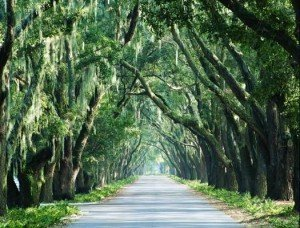 Avenue-of-Oaks-copy-525x400