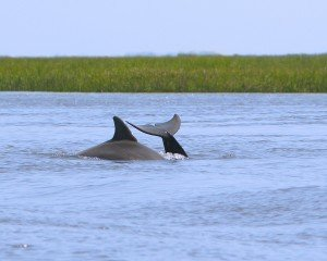 Dolphins_8989a