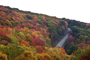 Part of the Cherohala Skyway, TN, (Cherokee Nantahala) in the fall