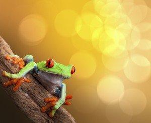 Oso Peninsula - Costa Rica - Tree Frog - International Retirement Destinations