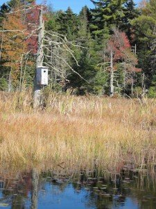 Nesting Boxes - Grantham NH - McDaniel's Marsh - Best Places to Retire in New Hampshire - Eastman Community Association