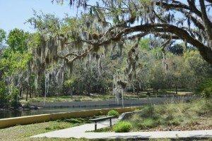 Salt Springs Walkway Ocala National Forest, Florida - Florida Equestrian Communities