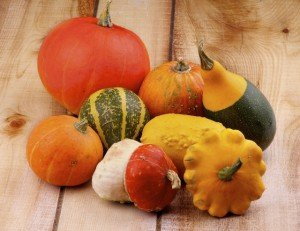 Winter Squash - Acorn Squash - Butternut Squash - Pumpkins - Gourds