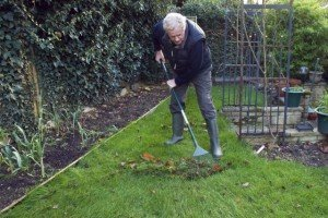 Gardening Tips - Raking leaves - Winterize your garden