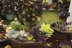 Gardening Tips - Gardening Trends for 2015 - Garden Trends - Succulents