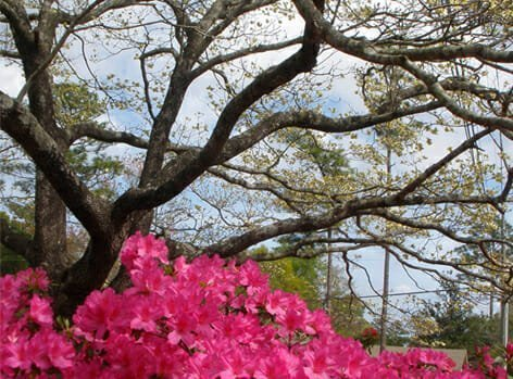 BeaufortSC_TREE