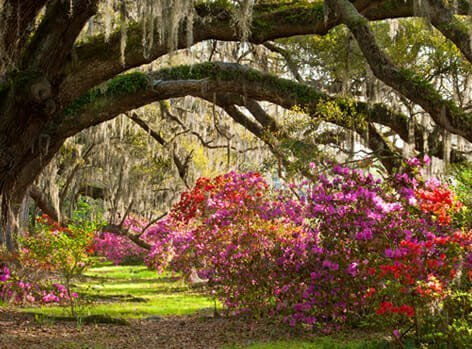 Charleston, SC Best Places for Retirement | Ideal-LIVING