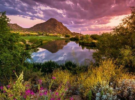 Phoenix_Desert