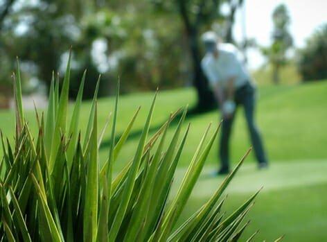 Phoenix_Golfer