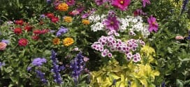 Sowing Flower Seeds and Other March Gardening Tips