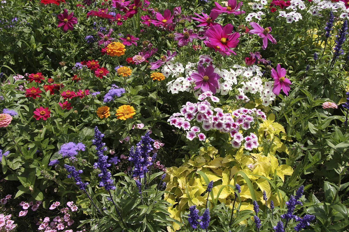 Sowing flower seeds and other march gardening tips for Perennial flower garden designs
