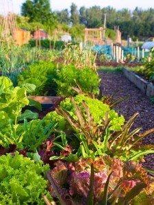 400_600VERT_GardenCommunty