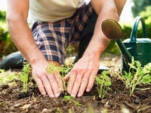 600_400Hol_Gardening
