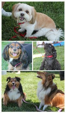 POOCH-STOCK 2015 at Trilogy Monarch Dunes
