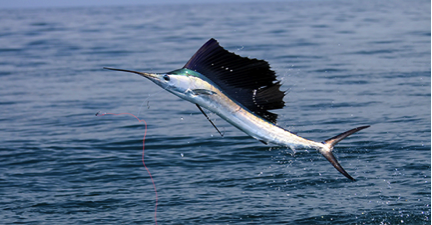 Prime Fishing Near Citrus Hills