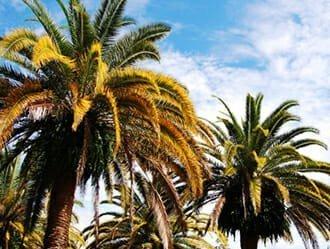 Best 2016 Debut Communities - Margarita Village Resort - Orlando, FL