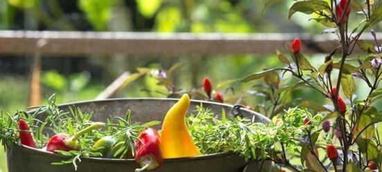 Best of Best Community Gardens - Dataw Island - Dataw Island, SC