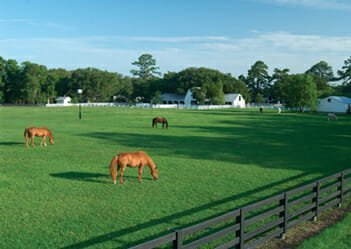Best Equestrian Facilities - Brays Island Plantation - Sheldon, SC