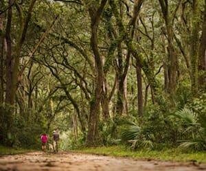 Best of Best Nature Trails - Palmetto Bluff - Bluffton, SC