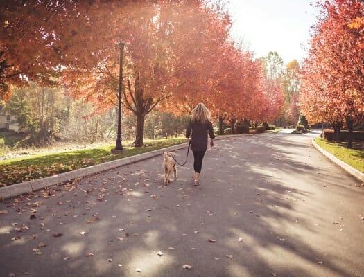 Virginian dog walking