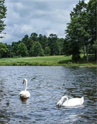 Best Lake Communities - Fawn Lake - Lenoir City, TN