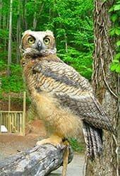 Best Nature Preserves - Balsam Mountain Preserve - Sylva, NC