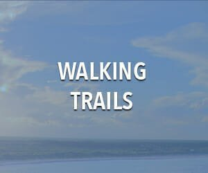 Best Walking trails